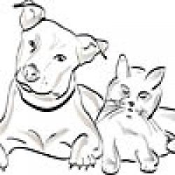 Info About Cats & Dogs